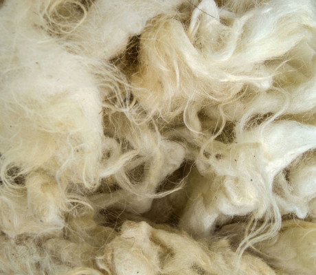 Wool Close Up